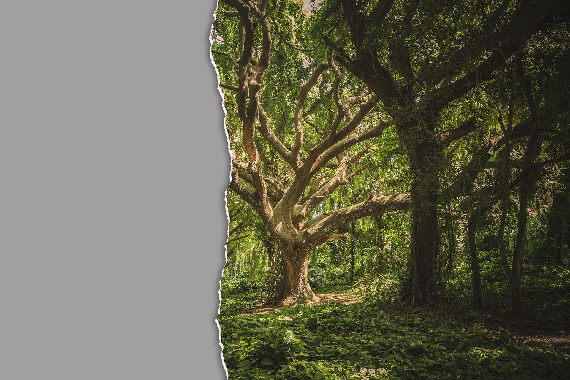 Εκκληση 30 Περιβαλλοντικών Οργανώσεων να αποσυρθεί το άρθρο 219 για τις περιοχές NATURA