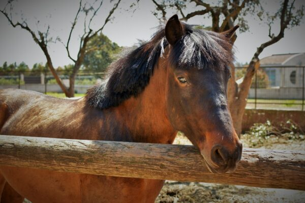 vagoni stables 10