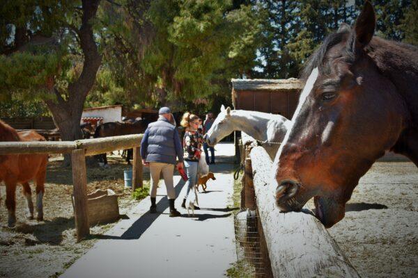 vagoni stables 24